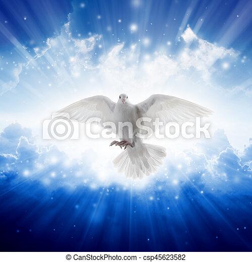 Nebeské ptactvo