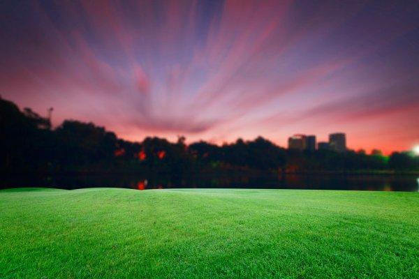 Polní tráva. Hvězdnatá noc. Košíček.